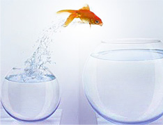 Photo of a fish jumping from a bowl of Brand Marketing to Digital Integration